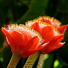 Nature's Bright Shaving Brushes - Paintbrush Lily - NZ by AndreaEL