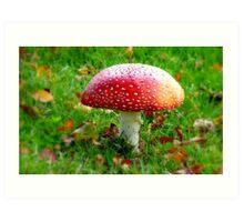 Magical Hallucinations - Amanita Muscaria - Fungi - NZ Art Print
