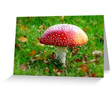 Magical Hallucinations - Amanita Muscaria - Fungi - NZ Greeting Card