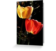Let the Light shine Through! - Tulips - NZ - Southland Greeting Card