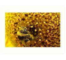 Bombus In A Sea Of Pollen! - Bumblebee On Sunflower - NZn Art Print