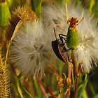 """Floyd the Bug"".....On Sinton Pond in Colorado Springs by dfrahm"