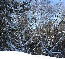 winter by teddynanie