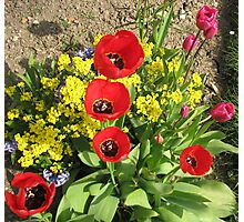 Colourful Corner - Vibrant Red and Pink Tulips Photographic Print