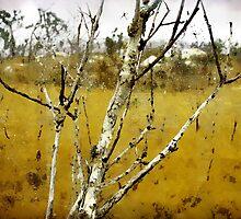 Spiders in the Rain, Mt. Stuart. by Frank  McDonald