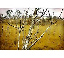 Spiders in the Rain, Mt. Stuart. Photographic Print