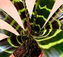 Bromeliad flower by Efi Keren