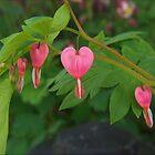 Bleeding Hearts by G. David Chafin