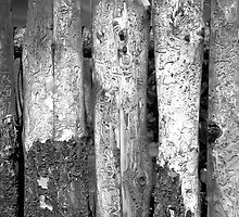Fence 7 by Robert Meyer