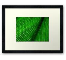 Nature's Pin Stripe Framed Print