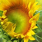 Sunflowers. When i was young. by marijkasworld