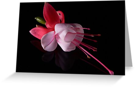 Fuchsia IV by Tom Newman