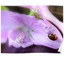 Ladybird, Ladybird... Fly Away...! - Ladybug - NZ Poster