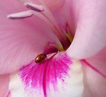 The Lady Is Glad... - Ladybug On Gladioli - NZ by AndreaEL