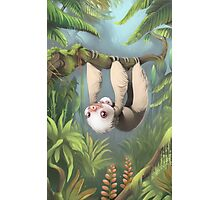 Sloth with Baby Photographic Print