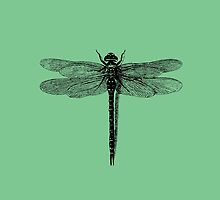 Dragonfly by Rob Price