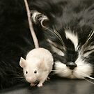 Cat and Mouse by Paul Morley