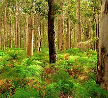 Karri Woodlands by Peter Hodgson