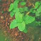 Fresh Mint v.2 by tropicalsamuelv