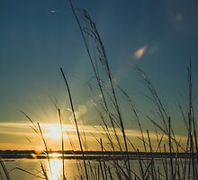 Wild plants at sunset by pedromgabriel