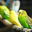 Parrot by flashcompact