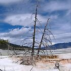 Mammoth Springs in North America by avocet