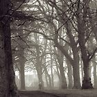 Trees at Grant Park, Forres by Tez Watson