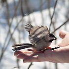 Bird by alightedsylph