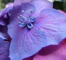 'Blue? or Pink? by Madonna McKenna
