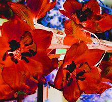 Delphiniums  by Hiroko