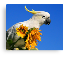 Sulphur Crested Cockatoo and Sunflowers Canvas Print