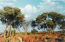 Outback trees by Jayson Gaskell