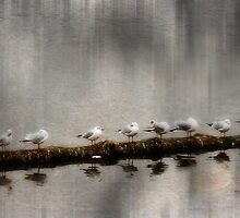 A Row of Sea Gulls by Alexandra Lavizzari