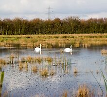 Swan Pond by Danny812