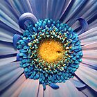 Blue flower! by konni27