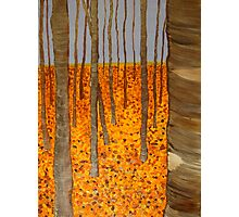 Aspens in Fall Photographic Print