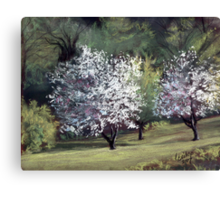 Spring on Franklin Road Canvas Print