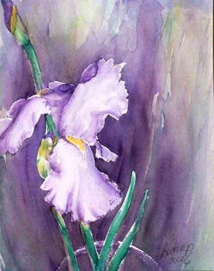 Summer Iris by Carolyn Bishop