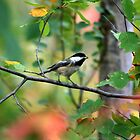Chickadee by DJ Fortune