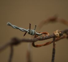 Barbed wire by Nicki Fellenzer
