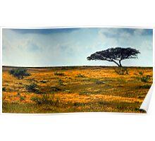 Lone Acacia Tree. Western Negev, Israel Poster