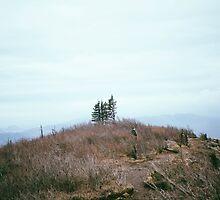 Lonely Trees by tonyell