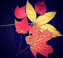 scanned leaves from Central Park  by ShellyKay
