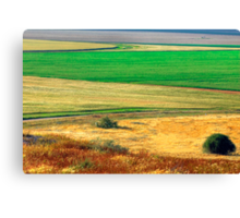 Wheat field, Negev desert, Israel Canvas Print