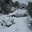 Good morning Snow!          at Cradle Mt. by gaylene