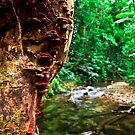 Rainforest Creek, Paluma. by Frank  McDonald