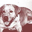 Sketch Of A Labrador by lyon2007
