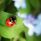 Ladybird Bokeh by Paul Revans
