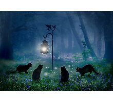 The Witches Cats Photographic Print