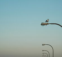 Lonely Bird by risingstar